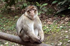 Trentham Monkey Forest